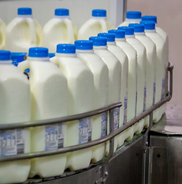 Milk in factory